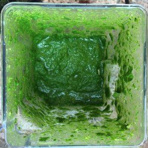 Blended cilantro leaves