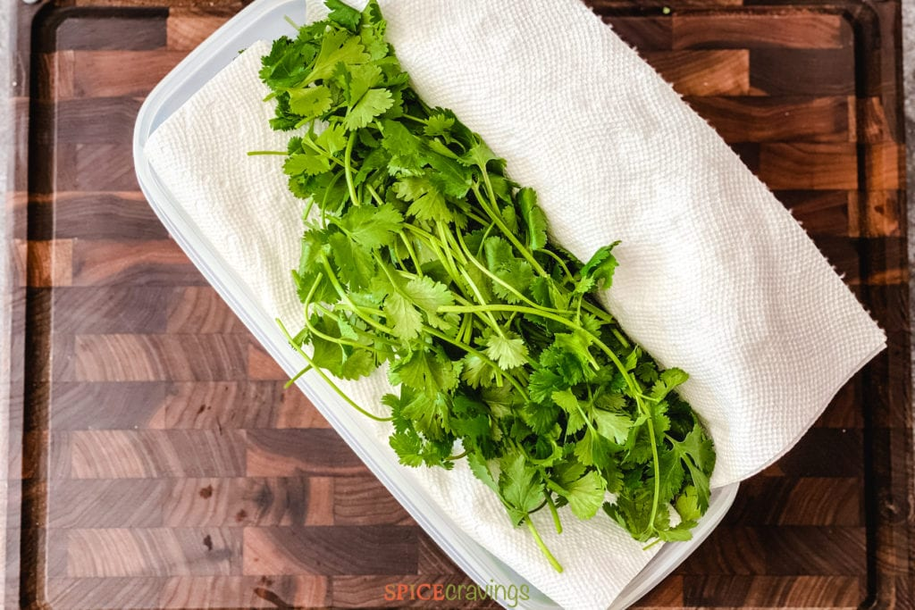 whole cilantro wrapped in paper towel in container