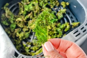 Hand holding air fried kale chip